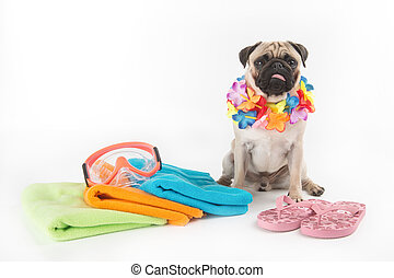 Ready for vacation. Funny dog sitting near the towel stack and swimming mask while isolated on white
