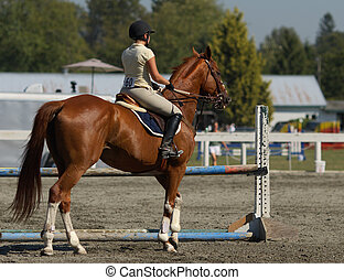 horse and rider waiting to compete in show jumping competition
