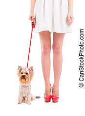 Ready to go walkies. Cropped image of woman in white dress carrying her little dog leashed and standing against white background