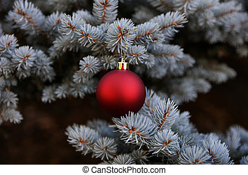 Real Blue spruce Christmas tree with red ornament for the holidays