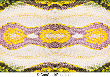 Real boa snake skin texture closeup