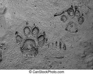 real dog footprint