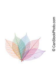 Real leaf with detail vein and various colors, decoration elements.