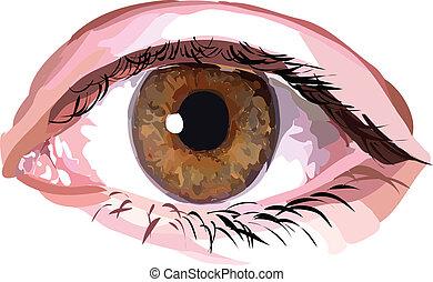 real, marrom, olho