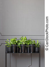 Real photo of plants on a metal stand against dark, empty wall with molding