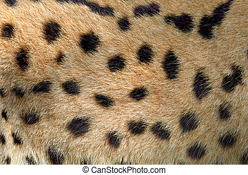 Real texture of serval cat fur - Close real texture of...