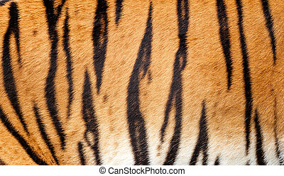 Real Tiger Fur Texture Background
