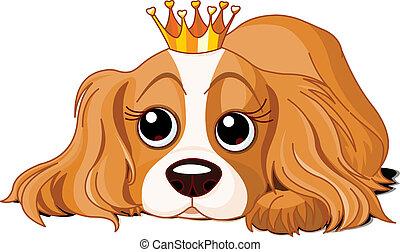 realeza, cão