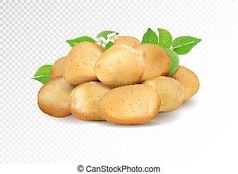 Realisic vector potatoes grope on transparent background. Potato with leaf and flowers.