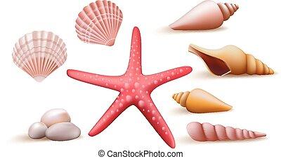 realista, cáscara, conjunto, mar, colorido