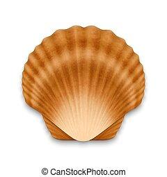 realista, concha marina, cerrado, 3d, vector, vista, marrón...