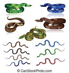 realista, conjunto, serpientes, bastante