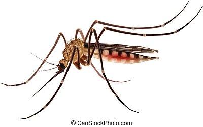 realista, mosquito, ilustración