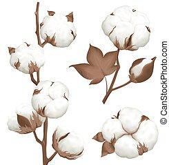 realista, planta, conjunto, cápsula, algodón