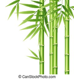 Realistic 3d Detailed Bamboo Shoots. Vector
