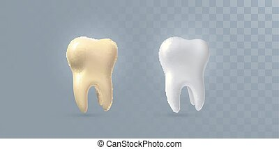 Realistic 3d tooth - Realistic 3d teeth isolated on...