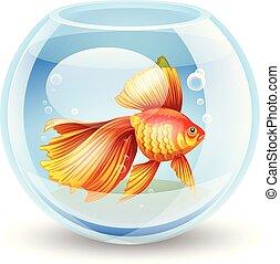 vector illustration of a goldfish i
