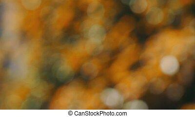 autumn natural bokeh light