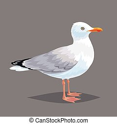 Realistic bird Seagull on a grey background.