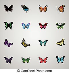 Realistic Birdwing, Tropical Moth, Butterfly And Other Vector Elements. Set Of Butterfly Realistic Symbols Also Includes Swallowtail, Morpho, Butterfly Objects.