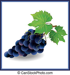 Realistic black grape with green leaves, isolated on white...