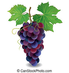 Realistic blue grape with green leaves isolated on white background, vector illustration