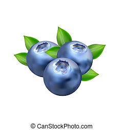 Realistic Blueberry Vector Isolated on White Background