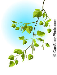 Realistic branch of birch isolated