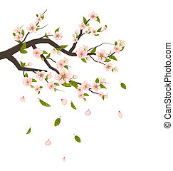 Cherry Blossom, Branch of Tree with Flying Petals Isolated on White Background