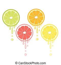 Realistic citrus slice set with leaves and drops of juice. Juicy lemon grapefruit lime and orange fruit. Fresh organic fruit design on white background vector illustration