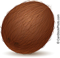 Realistic coconut. Illustration for design on white...