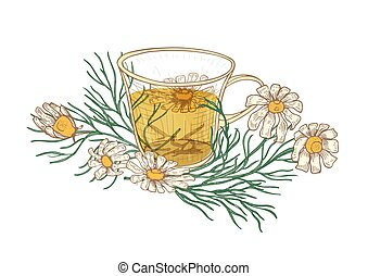 Realistic drawing of cup of tea, chamomile flowers and leaves isolated on white background. Delicious herbal hot drink, tasty beverage. Colorful hand drawn vector illustration in vintage style.