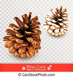 Realistic dry pine cone with snow isolated on transparent ...