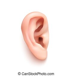 Realistic ear. - Realistic ear Isolated on white background....
