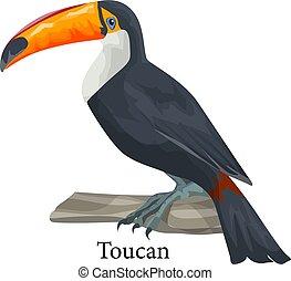 Realistic exotic tropical toucan bird. Adorable animal