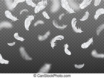 Realistic Falling Feather Background