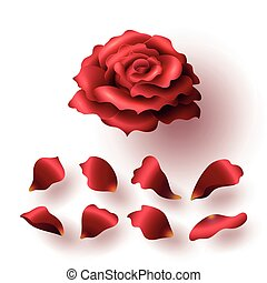 Realistic Glossy Red Blooming Rose and Petals Set