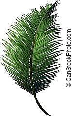 Realistic green branch of tropical coconut palm.