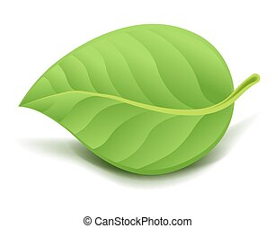 Realistic Green Leaf. Vector Illustration isolated