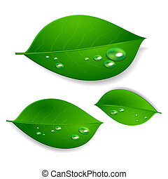 realistic green leaves with water drops isolated texture on white background