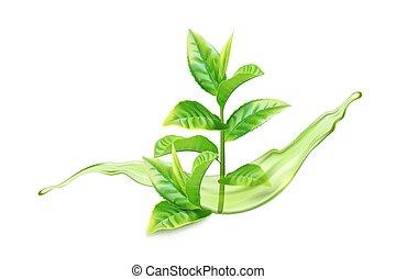 Realistic green tea branch with water splash. Vector illustration