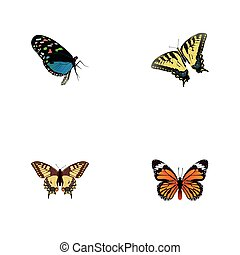 Realistic Hairstreak, Tiger Swallowtail, Monarch And Other Vector Elements. Set Of Moth Realistic Symbols Also Includes Blue, Bluewing, Tiger Objects.