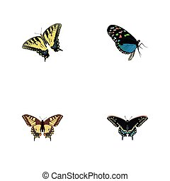 Realistic Hairstreak, Tiger Swallowtail, Morpho Hecuba And Other Vector Elements. Set Of Moth Realistic Symbols Also Includes Tiger, Moth, Butterfly Objects.