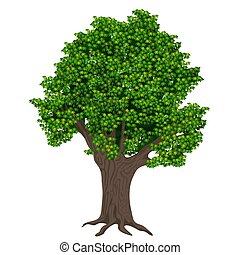 Realistic high detailed vector plant tree isolated.