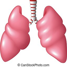 Realistic Human Lungs respiratory
