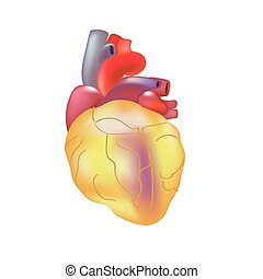 Realistic human sick heart isolated on dark gray background.