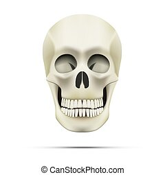 Realistic Human Skull Isolated On White