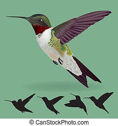 realistic humming bird vector isolate on green