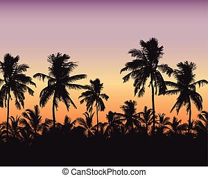 Realistic illustration of a palm forest. Purple orange sky with space for text, vector