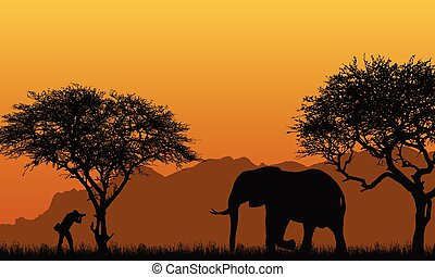 realistic illustration of a silhouette of a man photographer and elephant in an African safari with trees, mountains under an orange sky , vector